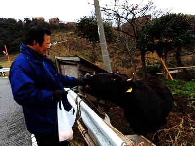 牛とお父さん
