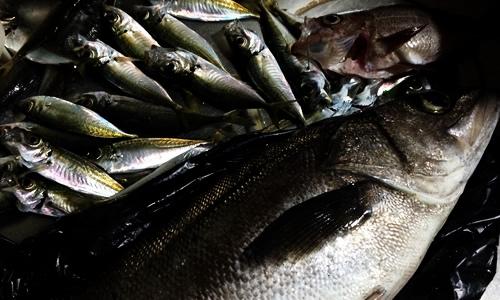 大漁の魚たち